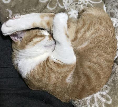 猫が丸くなって寝るのは寒いからだけじゃない?