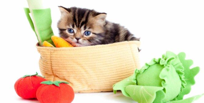 猫にキャベツを与えても大丈夫?食べていいもの悪いもの