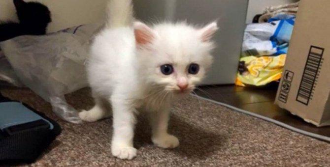 明日殺処分の子猫7匹を救え!幸せな里子になるまでを追う〜その2〜