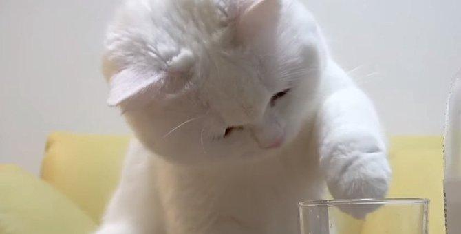 泡から目が離せない!炭酸水に興味津々の猫さん