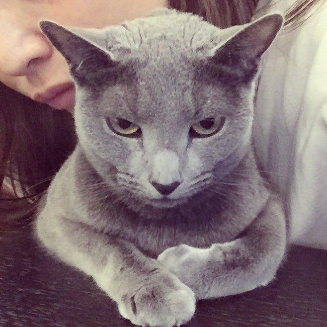 梨花の愛猫キョロちゃんについて、ハワイ移住はどうしてる?
