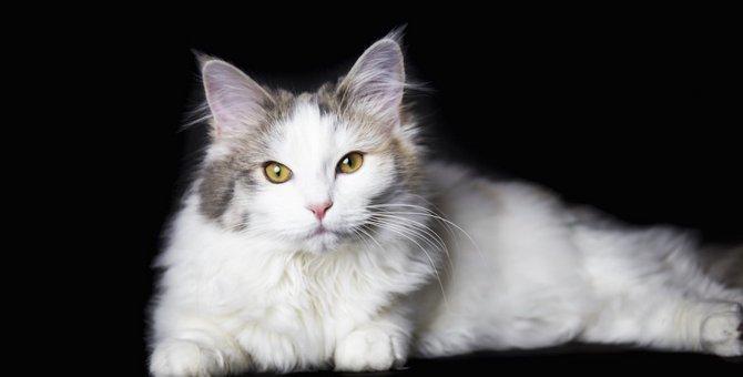 病気?老化?猫の毛がボサボサになる理由は?