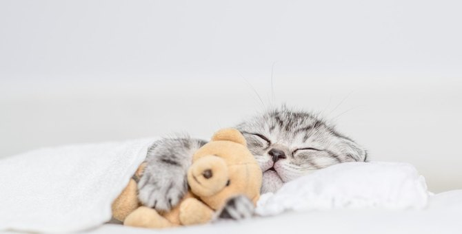 猫が『飼い主の枕の上』で寝たがるワケ4つ