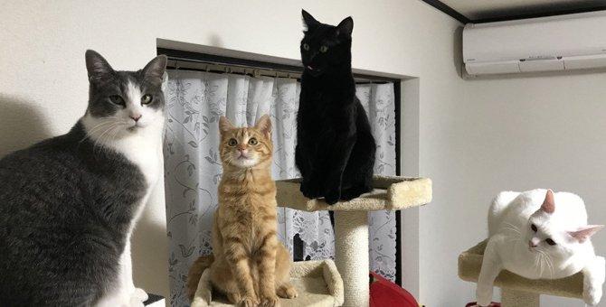猫の『名前』で迷ったら!ネーミングに役立つアイデア3選