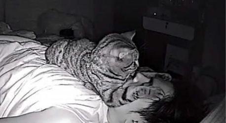飼い主が寝てる間に猫は何してる?カメラがとらえた姿にほっこり♡