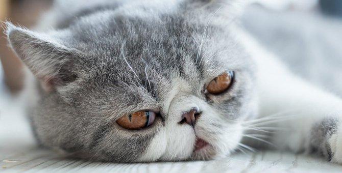 『飼い主不足』を感じている猫がする仕草5つ