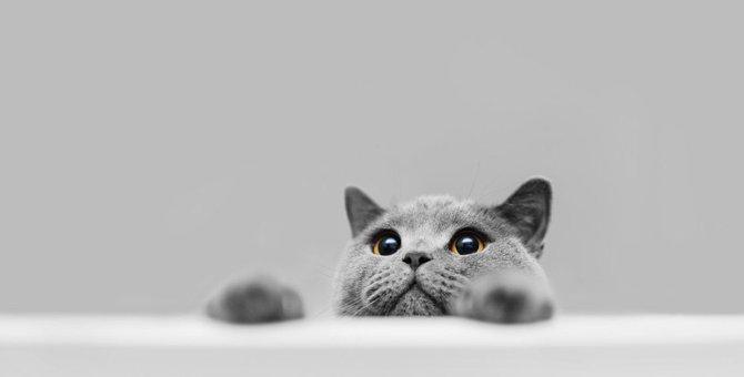 猫が日常で『楽しみだニャ♡』と思っていること4つ