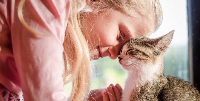 飼い主が新型コロナに感染したら、愛猫はホテルに預けられる?