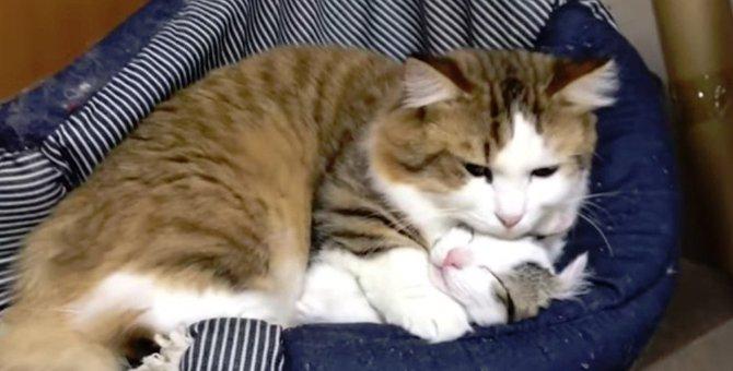 猫の上で寝るのが好きな親子猫