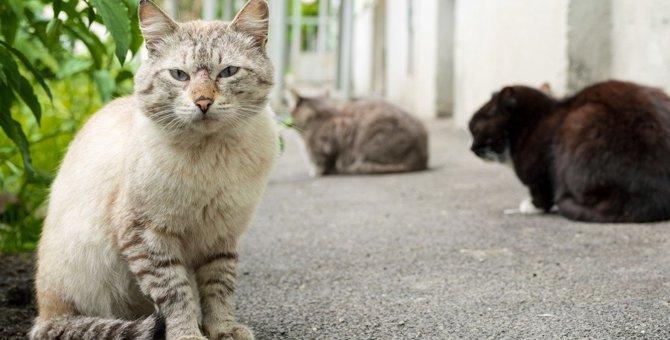 放し飼いで猫が負う怖いリスク6つ