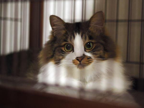 猫が快適にすごせる「お留守番対策」6つ