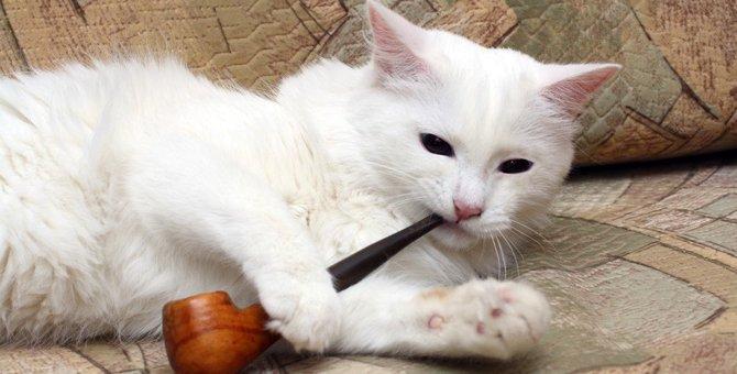 飼い主の喫煙が飼い猫に与える影響