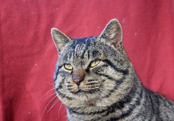 猫の世界には『上下関係』はあるの?