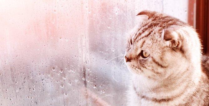 梅雨の時期の猫のトラブルとそれを乗り切る方法