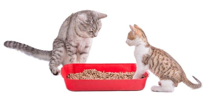 子猫の血便について 原因と考えられる病気、治療法について