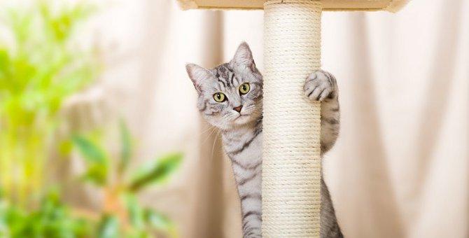災害時は室内でも危険!猫のためにできる『安全確保』の方法5つ