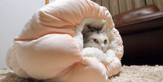 新しい猫ベッド♪可愛いお尻もこんにちは!