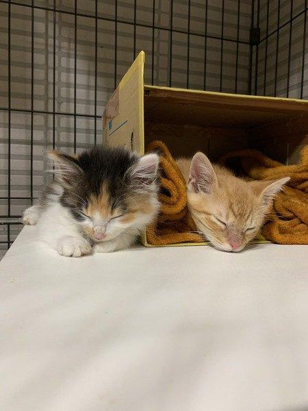 猫の「寝相」には性格が出る?5つの特徴