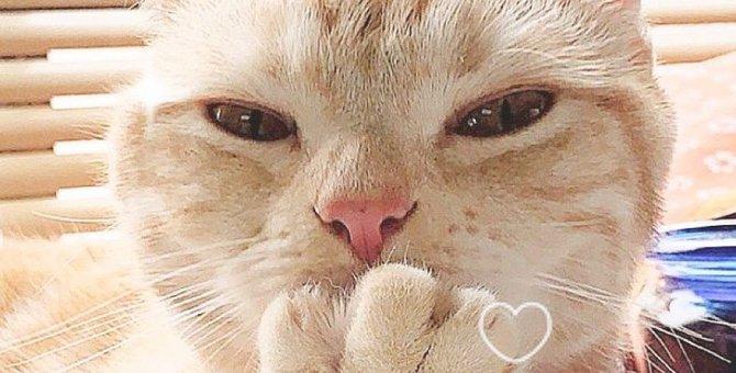 猫の平均寿命は何歳?長寿の猫種ランキングTOP5