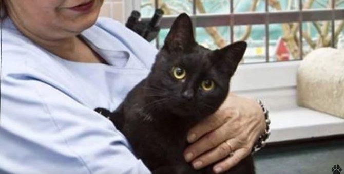 傷ついた動物を癒す看護猫…クリニックでの忙しい仕事ぶりとは?