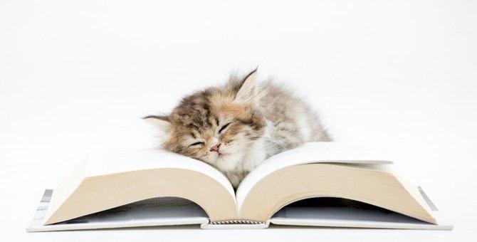 読んだ事ある?猫で振り返る!平成のマンガ