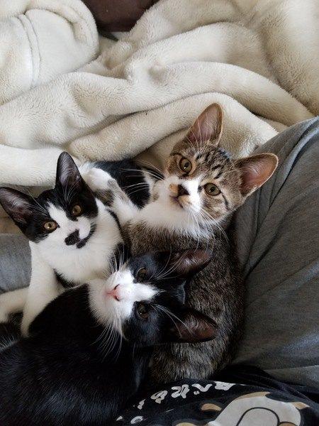 猫のケンカはなぜ起こる?理由と止め方6つ