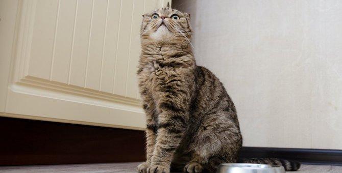 猫が飼い主のそばでご飯を食べなくなったときに考えられる理由5つ