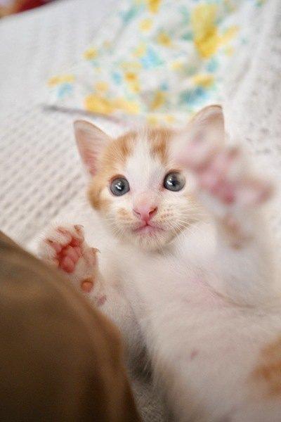 子猫が邪魔してくるときの対処法