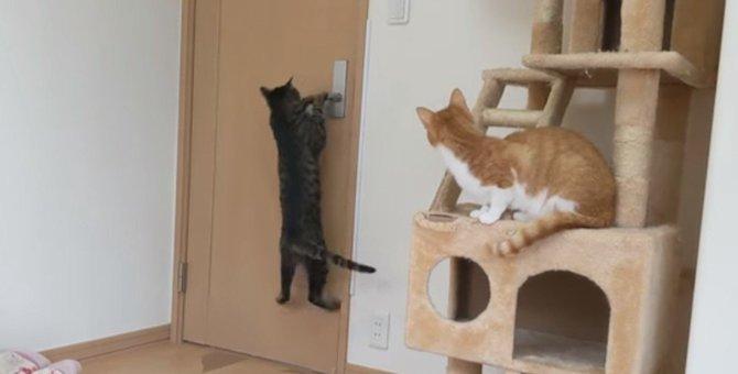 猫ちゃん覚悟を決めた大ジャンプ!男の背中をとくと見よ!