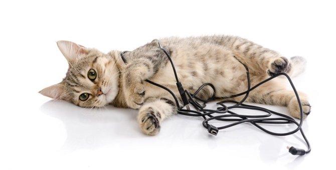 生活を彩る猫グッズ  猫のタップボックス