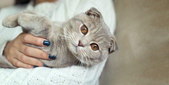 猫が抱っこさせてくれる人とさせてくれない人の違い4つ