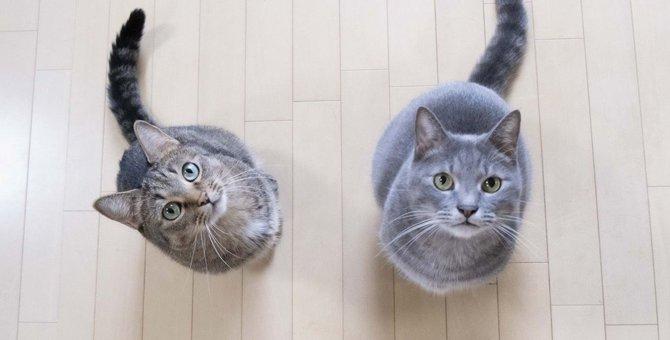 猫に好かれたい…『慕われる人』に共通する5つの事