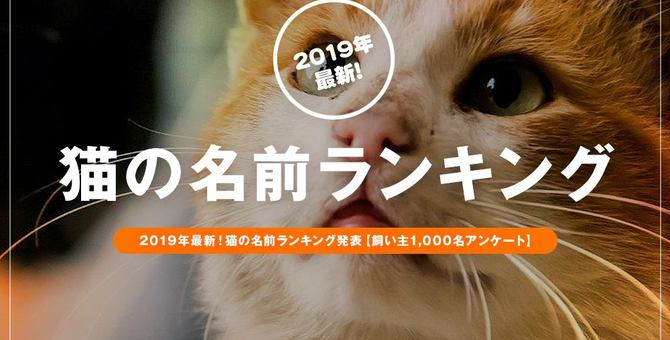 2019年最新!猫の名前ランキング発表【飼い主1,000名アンケート】