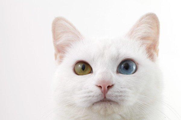 ミステリアスで魅力的な猫の目を徹底解明!暗くても物が見えるのはなぜ?