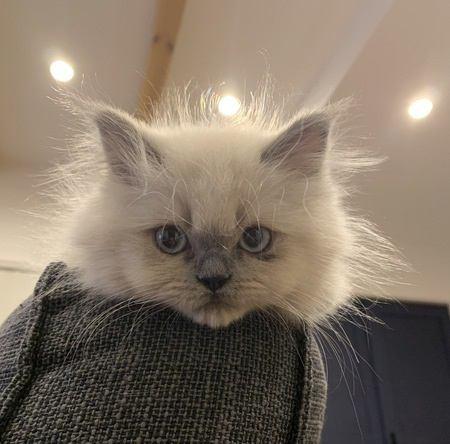猫の毛がついた洋服をかんたんにキレイにする方法4つ