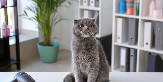 飼い主さんのお悩みあるある『猫のドライヤー問題』対処法はある?