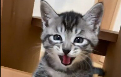 ママのぶんも生きるニャ!飛び出す子猫の愛らしさに5万人が悶絶!