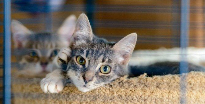 猫が『もの悲しい気持ち』になってしまうシーン3つ