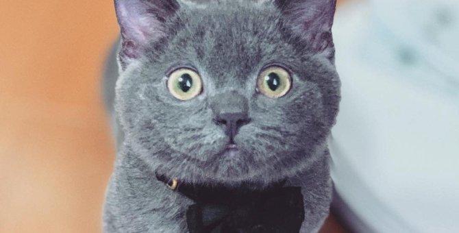 Laylaの12猫占い 10/7~10/13までのあなたと猫ちゃんの運勢