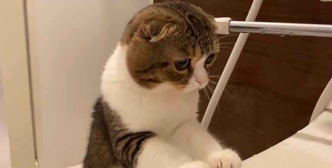 大丈夫?お風呂に入る飼い主さんを心配する猫さん