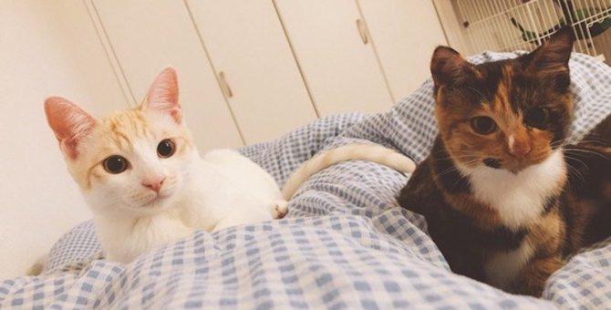 猫が一緒に寝る人を選ぶ5つの条件