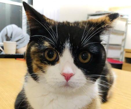 猫からの5つのアプローチでわかる飼い主の愛され度