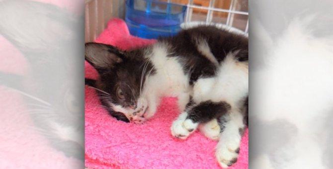 保護ラッシュ!片足が動かない子猫、虫を食べ生き延びた子猫…