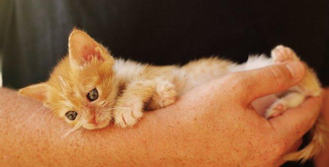 猫が抱っこを嫌うのはなぜ?6つの理由