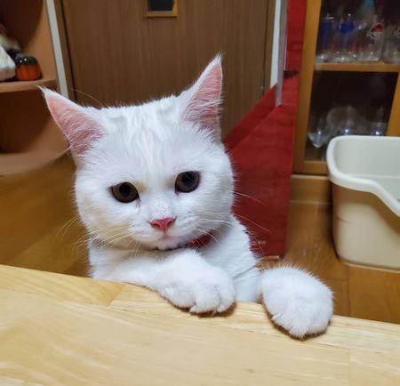 猫にドッグフードはNG!その理由3つ