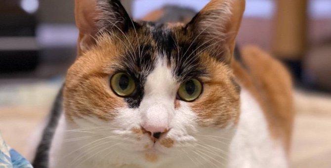 猫が飼い主の『顔色』をうかがっている時の態度5つ