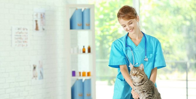 猫が吐くのは病気が原因?主な理由や嘔吐の危険度チェックなど