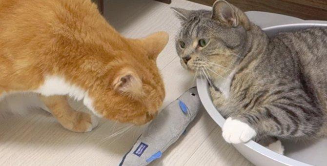 遊びたいのにくしゃみに妨害される猫ちゃんが可愛い♡