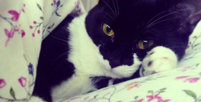 人気猫「ギズモさん」とは?人気の秘密