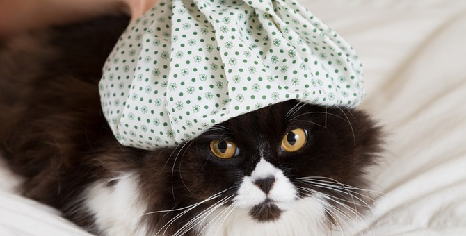 猫が咳をした時に気をつけるべき病気